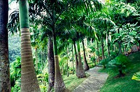 Garden of Balata, Martinique