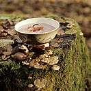 Chestnut soup bacon on tree stump