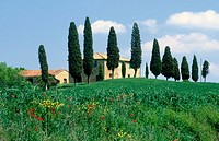 Country house and cypresses. Pienza, Tuscany, Italy