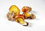 Four Caesar´s mushrooms