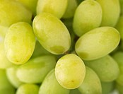Seedless table grapes filling the picture