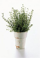 Pot Full of Fresh Thyme