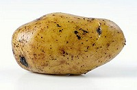 A potato, variety ´Siglinde´