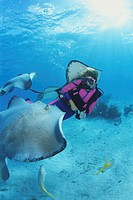 Mature female diver and southern stingray, underwater view