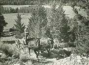 Man driving horse-drawn vehicle on dirt-road, (B&W)