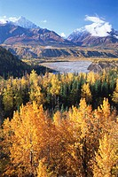 USA, Alaska, Matanuska Valley, cottonwood and willow trees, autumn