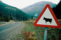 Cow crossing sign. Roncal valley. Navarra. Spain