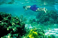 Coral reef. Caribbean sea. Belize