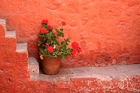 Flowers in Santa Catalina Monastery