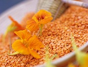 Nasturtium and lentils in bowl, elevated view, close-up