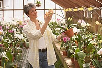 Hispanic woman looking at potted plant in greenhouse