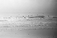 Birds flying around waves at beach, b&w