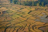 Terraced Fields, Pokhara, Nepal