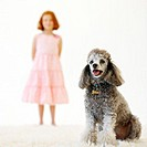 Close up of a poodle and young girl (9-10) in the background