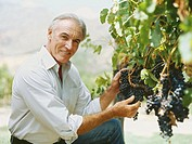 portrait of a mature man holding grapes in a vineyard