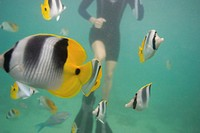 Person snorkelling with tropical fish in ocean, low section