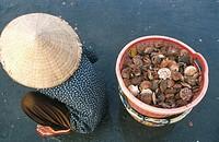 FISHERMAN<BR>Freshly caught scallops, Mui Ne, Vietnam.