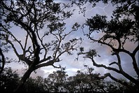 thunderstorms, flash, storm, storm, wood, trees, tops of a tree, dusk, twilight, USA, America, United States, North Am
