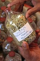 HERBALIST´S SHOP<BR>White horehound (Marrubium vulgare), Belgassem Abdelatif´s medicinal plants. Tunisia.