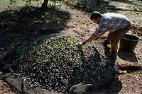 A farmer by a heap of berries