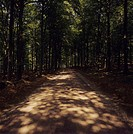 A road in the shade of a forest