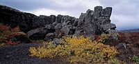 Rocky landscape in Thingvellir