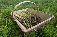 Asparagus in wooden trug
