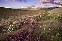 Anza Borrego Desert State Park California USA