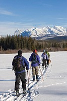 Four people cross country skiing with dog, rear view