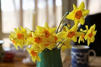 Daffodils on breakfast table