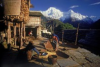 Women chaffing grain in village of Ghandruk below Annapurnas in Nepal at sunirse