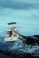 Marlin fishing  Caribbean