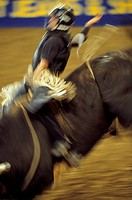 Blurred image of a cowboy riding a bull while wearing a helmet to protect his head at a rodeo in Mesquite, Texas.