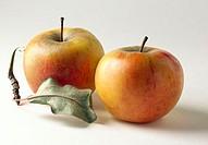 Reine de Reinette apples