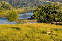 Nalón river. Pravia. Asturias. Spain.