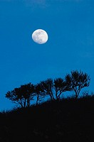 Moonrise over scrub oak trees, Wasatch Mountain foothills, SLC. Utah. USA