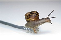 Garden Snail on ethernet cable