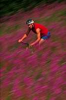Mountain biker riding thorugh field of flowers, blurred