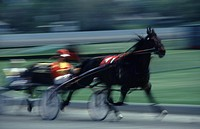 Blurred action shot of two horses in a harness race.