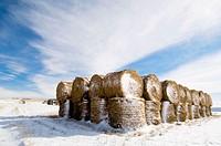 Stacked hay bales in snowy prairie. Alberta, Canada