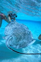 Woman Swimming with Stingray