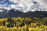 USA, Colorado, Aspen, Rocky Mountains,   Forest, autumn,  North America,  United States of America, west Colorado, North American Kordilleren Rockies ...