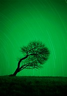 Tree, silhouette, night, firmaments, long time exposure  Nature, heaven, evening heaven, stars, heaven, astronomy, astronomy, astronomy, aberration, E...