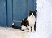 House, detail, door blue, cat,  black-and-white, waiting  Threshold, front door, animals, mammals, pet, house cat, entrance, sitting outside, summer c...