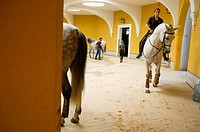 Thoroughbred Spanish horses at the Royal Riding School, Jerez de la Frontera. Cádiz province, Andalusia, Spain