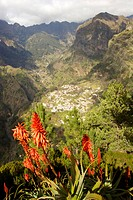 Portugal, island Madeira, Eira of do Serrado,  Look Curral of the Freiras, agave, blooms  Europe, landscape, highland, mountains, view, place, place, ...