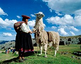 Peru, Sacsayhuaman, mountains,  Ruin place, Indio-Frau, llama no models release South America, close to Cuzco, wildlife, Wildlife animal mammal  usefu...