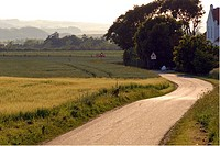 Winding road in a typical danish summer landscape in a hazy evening  light. Jutland, Denmark