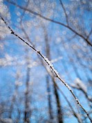 Forest, detail, branches, hoarfrost, winters,    Shrubs, plants, hedge, branches, icy, freezes frost snow crystal of ice crystals, season, cold, defic...