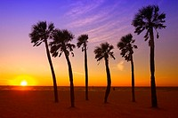 USA, Florida, Clearwater Beach,  Sandy beach, palms, sunset,   Beach, beach, palm beach, palm group, sea gaze, evening mood, sunset, wideness, distanc...